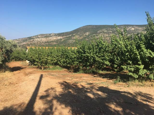 (For Sale) Land Agricultural Land  || Arkadia/North Kynouria - 15.000 Sq.m, 150.000€